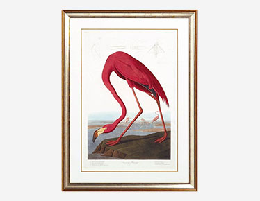 American Flamingo framed print