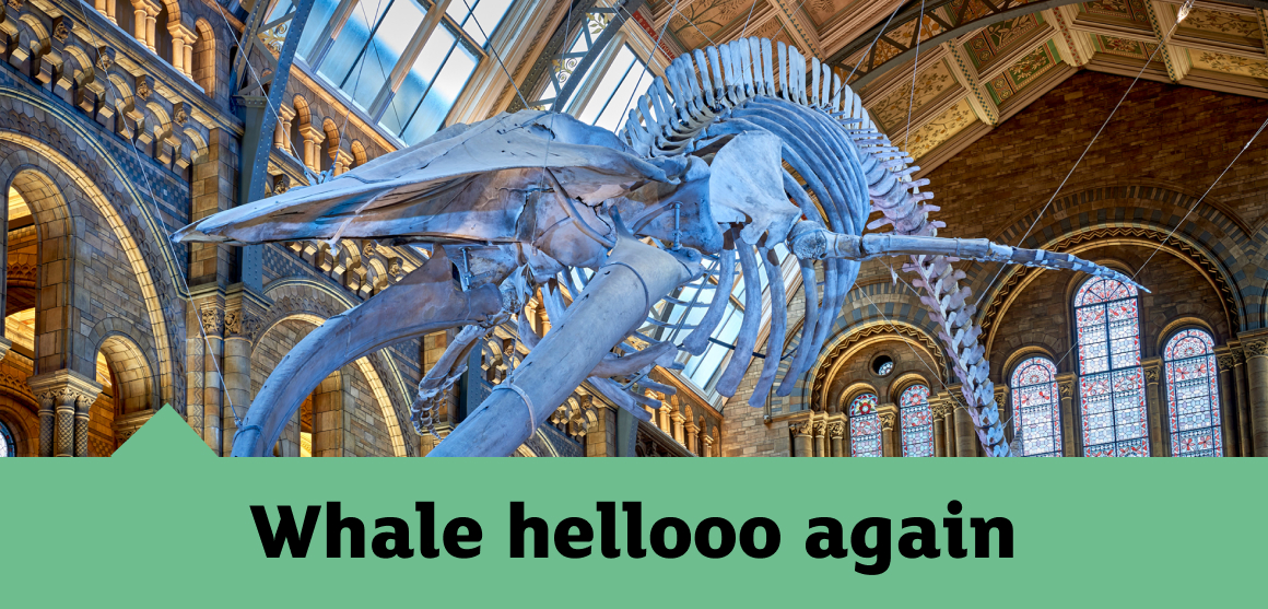 Plan your visit | Natural History Museum