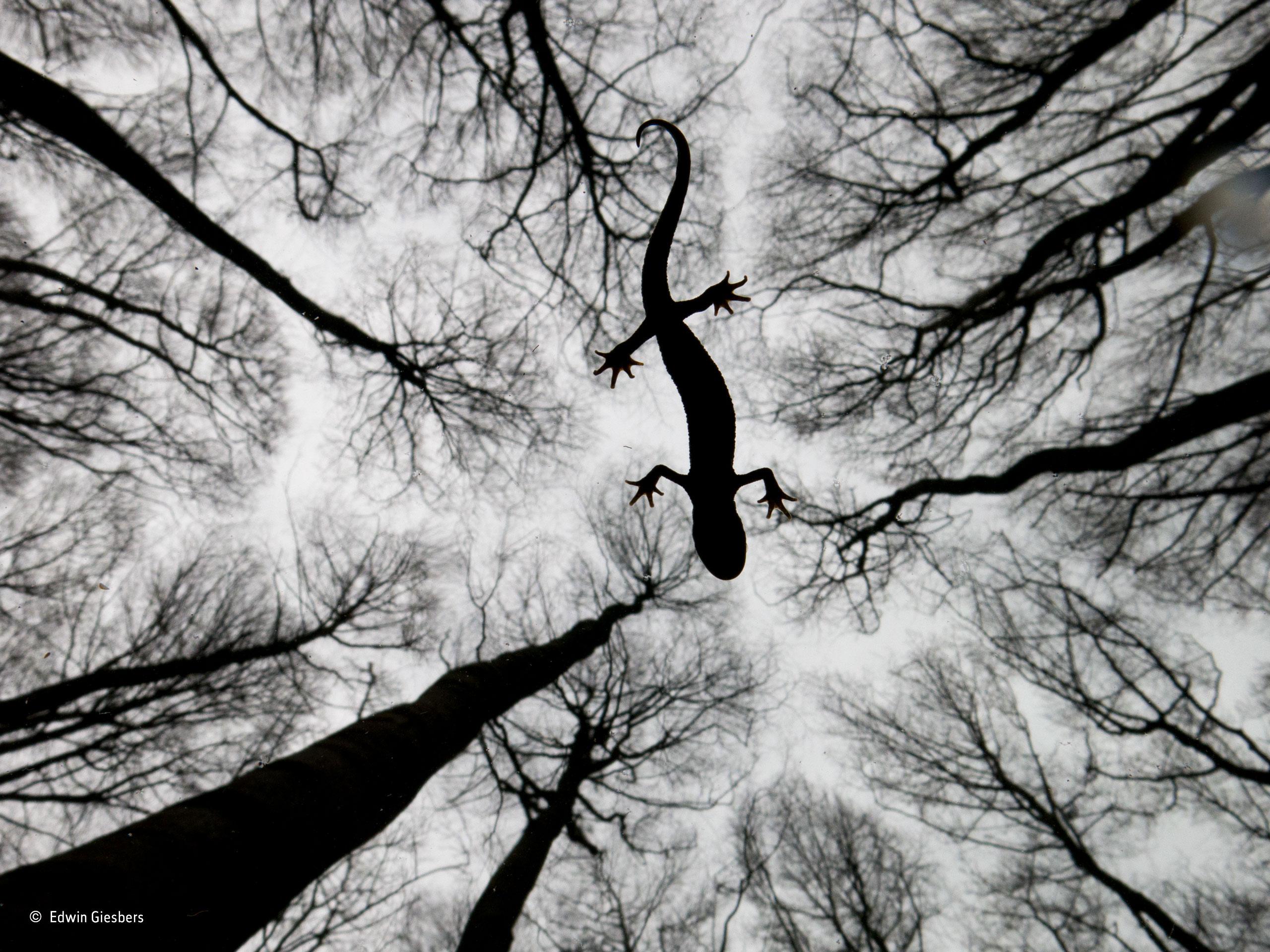 Winning Photography Nature