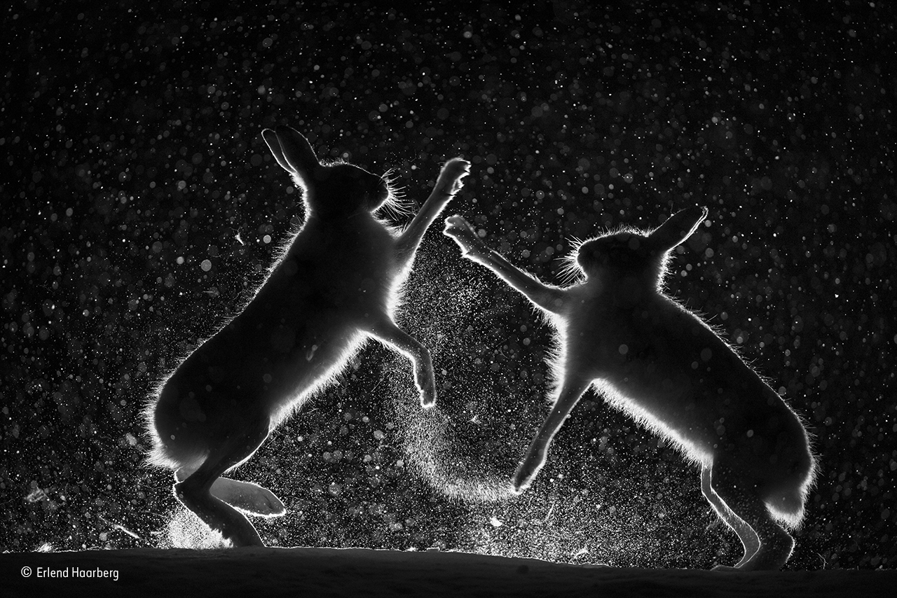 Natural History Photographer Of The Year