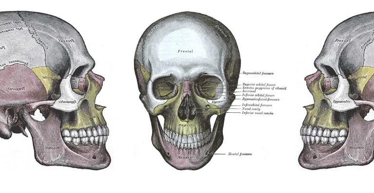 Anatomy of a skull