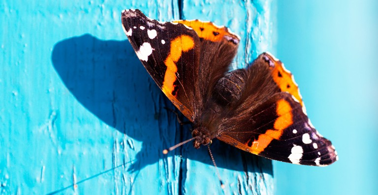 A butterfly on a blue door