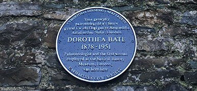 The blue plaque recognising Dorothea Bate's achievements