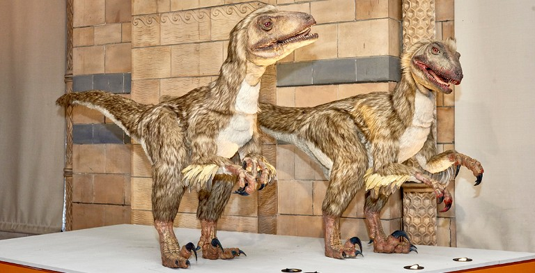 The Deinonychus exhibit in the Museum