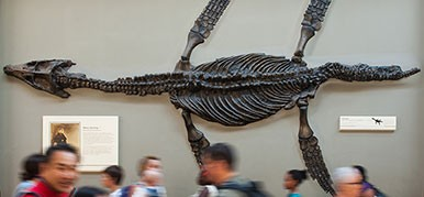 Fossil Marine Reptiles gallery