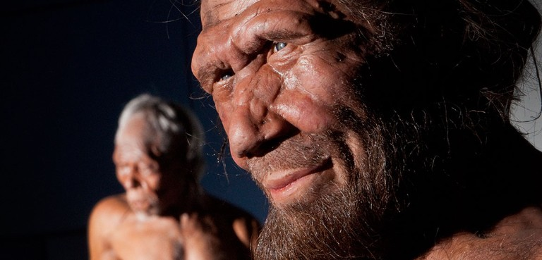 A Neanderthal model from the Britain One Million Years of the Human Story exhibition