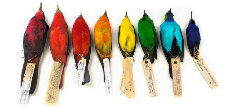 project-plumage-rainbow-tanagers-news-full-column