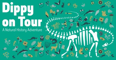 Dippy on Tour graphic of a Diplodocus skeleton surrounded by natural history objects