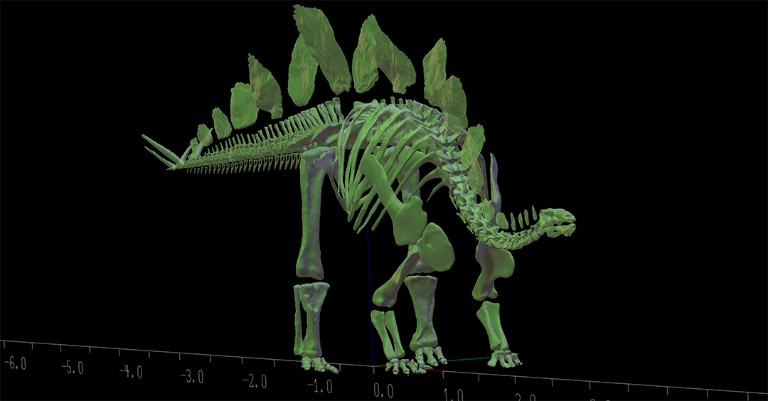 3D model of the Museum's Stegosaurus specimen