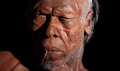 Face of a Homo sapiens model based on a human who lived around 30,000 years ago