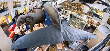 Mezzanine level of Mammals gallery