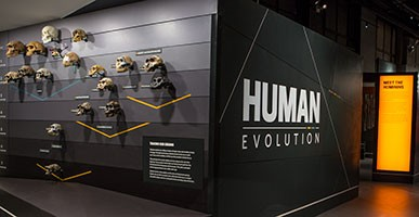 Entrance to the Museum's Human Evolution gallery, featuring a wall of hominin skulls