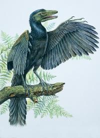 Illustration of an archaeopteryx perching on a branch.