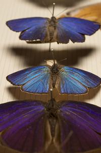 Butterflies on display.