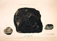 Engravings of meteorites by James Sowerby, with Wold Cottage at the centre.