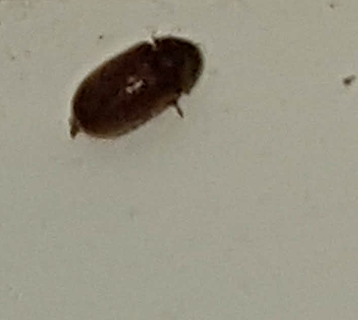 NaturePlus: Please help ID these small black flying bugs on