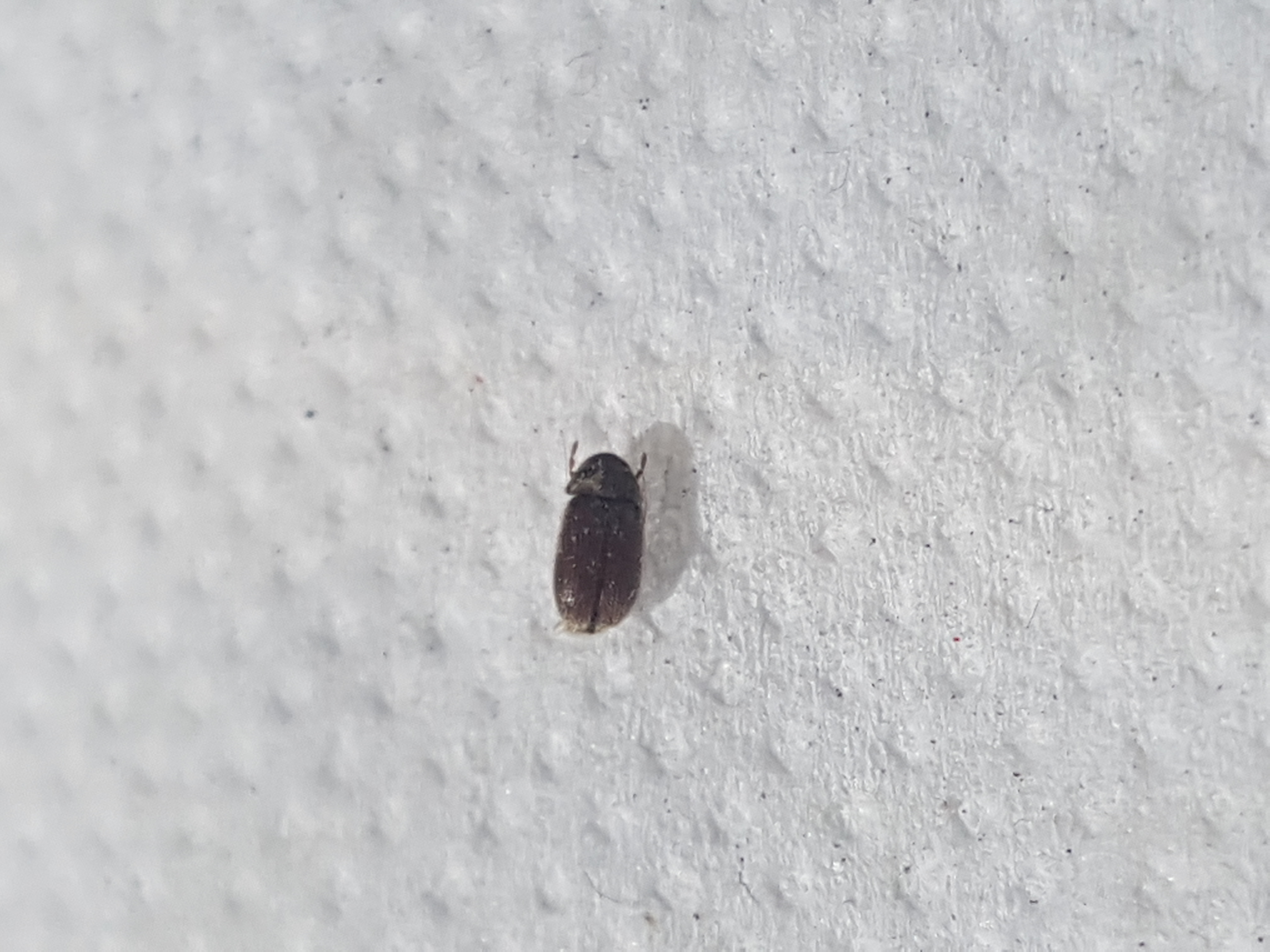 Small Black Flying Bugs On Window