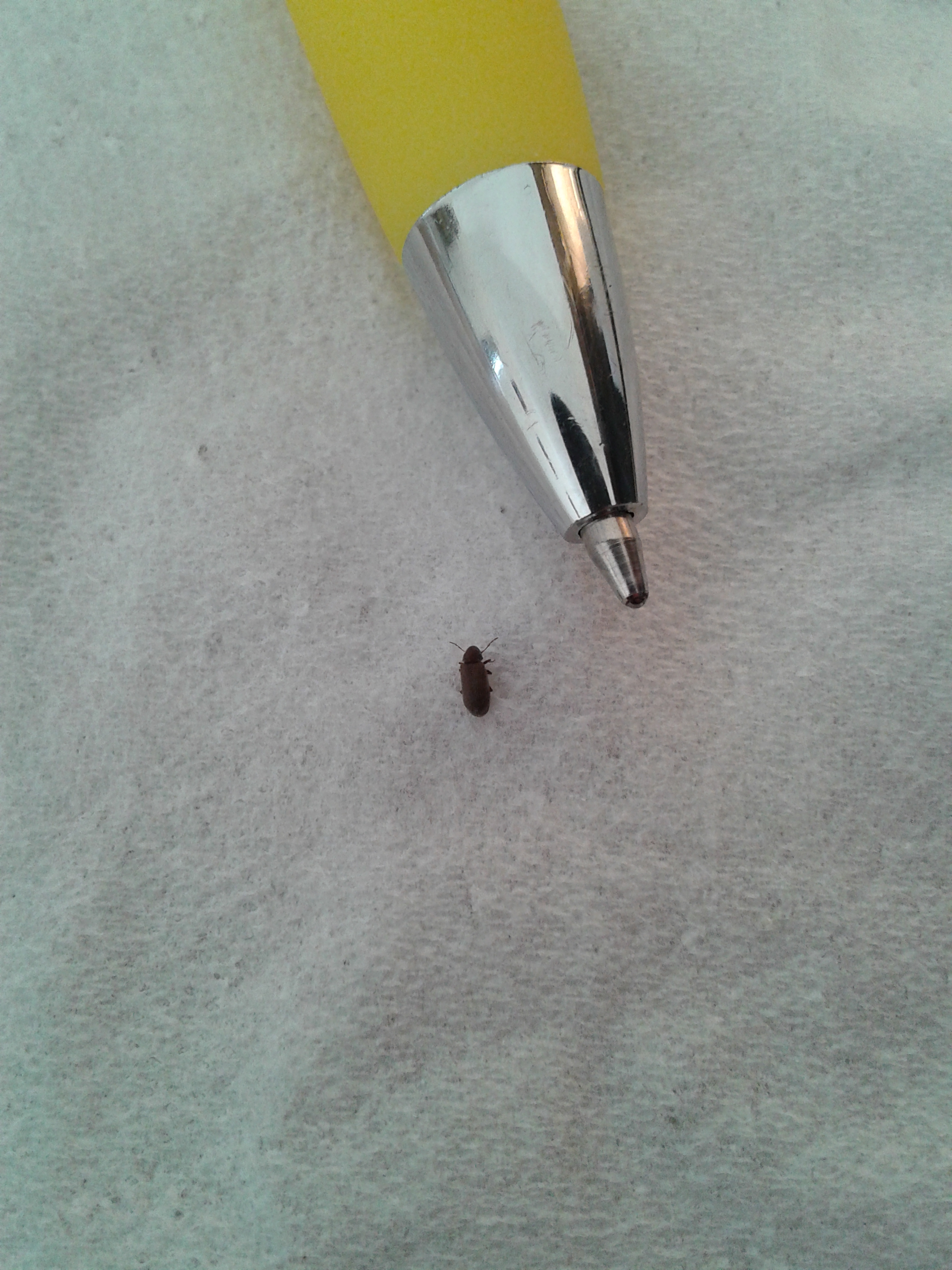 NaturePlus: Tiny black bugs around the house