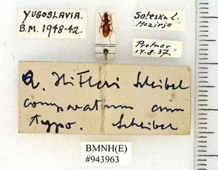 NaturePlus: Beetle blog : Tags : entomology