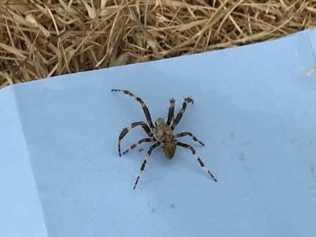 Spider 1.jpg
