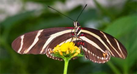 butterfly-500-2.jpg