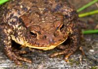 toad-200.jpg