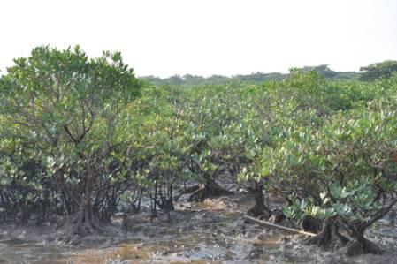 Mangroves_DSC_1612.jpg