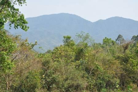 Dry_forest_DSC_2286.jpg