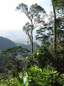 tegetero-forest.jpg