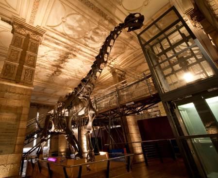 Dinosaur-Gallery-800.jpg