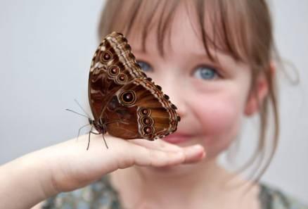 butterfly-release-girl.jpg