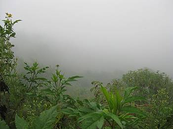pic5-inside-cloud-forest.jpg