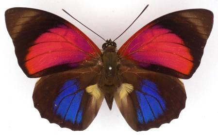 claudia-butterfly-2.jpg