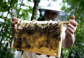beehive-wildlife-garden-2.jpg