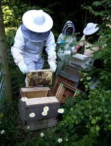 beehive-wildlife-garden-1.jpg