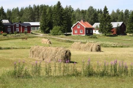 Fieldwork,+Sweden.JPG