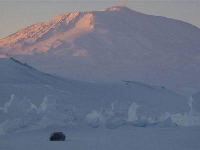 Seal w Mt Erebus.jpg