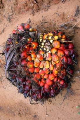 Palm fruit.jpg