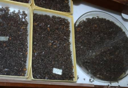 Diptera material - MZUSP (1) small.jpg