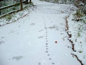 footsteps-snow-wildlife-garden.jpg