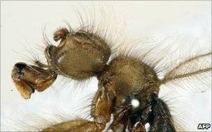 Terrible hairy fly.jpg