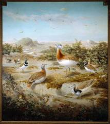 Keulemans-bustards700.jpg