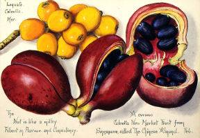 21871 tonge fruit.jpg