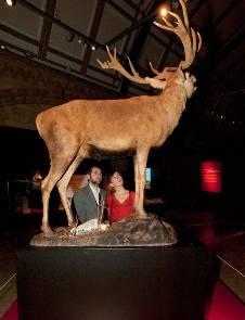 SN-media-preview-deer.jpg