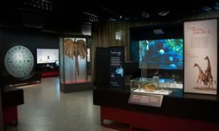 SN-exhibition.jpg