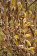 spring-shrubs-1000.jpg