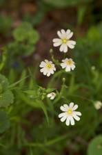 white-flower-spring-1000.jpg