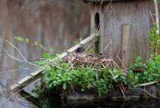moorhen-nest-outside-1000.jpg