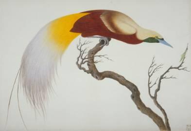 lesser-bird-paradise-1000.jpg