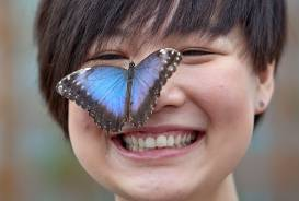 blue-morpho-woman.jpg